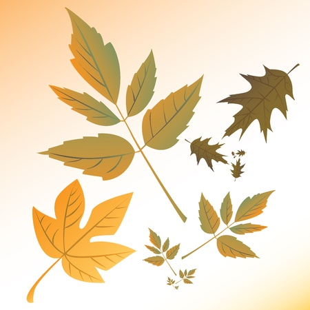 autumn leaf frame: autumn leafs illustration