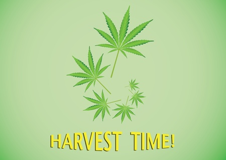 harvest time: Harvest time cannabis leaf illustration Illustration