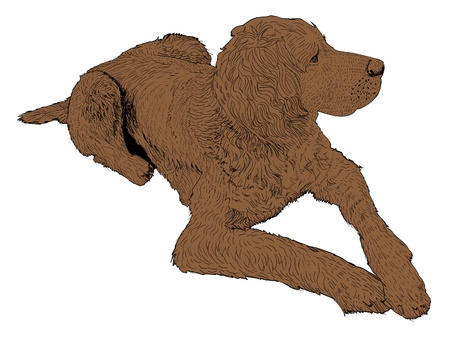 lovable: isolated bird dog - illustration