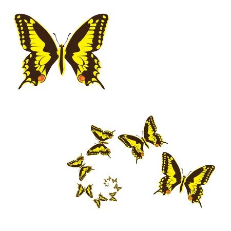 fragility: yellow butterflies illustration Illustration