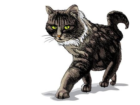 pozőr: elszigetelt gyalogos macska fehér - illusztráció Illusztráció