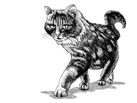 isolated walking cat on white - illustration Vector