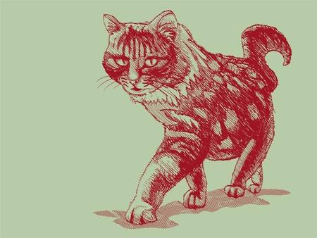 pozőr: elszigetelt gyalogos macska zöld - illusztráció