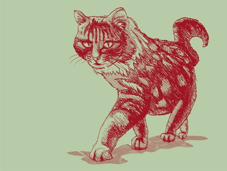 isolated walking cat on green - illustration Vector