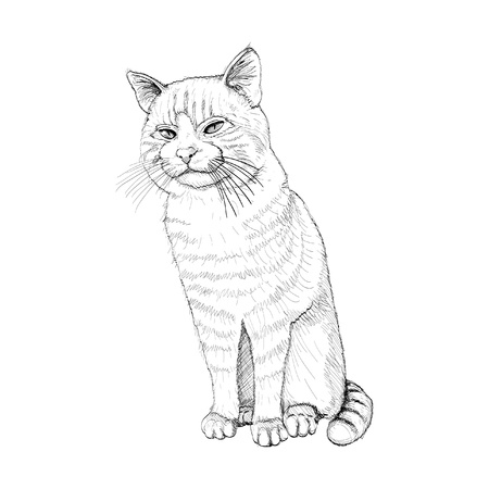 purr: isolated sitting outline cat on white - illustration