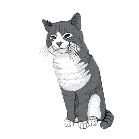 isolated sitting cat on white - illustration Vector
