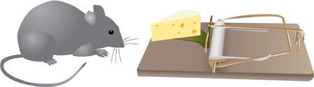 mouse trap: Mouse traps before - color illustration