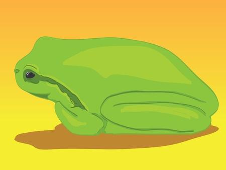 red eyed leaf frog: Little green tree-frog - illustration