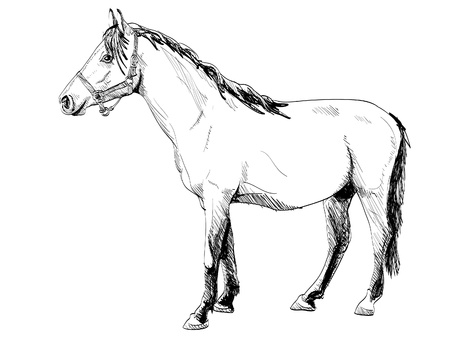 dibujos lineales: caballo aislado contorno blanco - ilustración Vectores