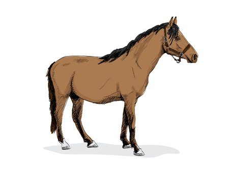isolated brown standing horse - illustration