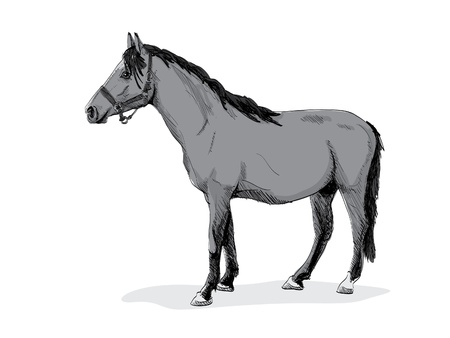 isolated gray standing horse - illustration Vector