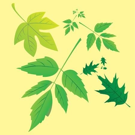set of green leafs - illustration Vector