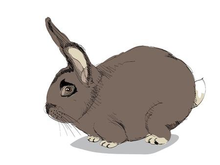 brown hare: isolated cartoon rabbit on white - illustration Illustration