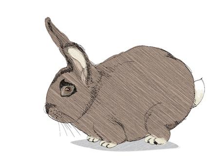 isolated cartoon rabbit on white - illustration Stock Vector - 12450086