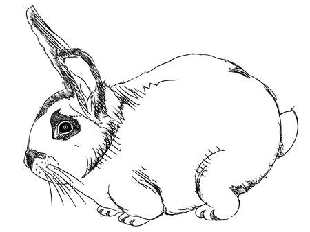 isolated cartoon outline rabbit on white - illustration Stock Vector - 12450076