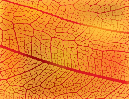 macro: structure of autumn leaf - illustration Illustration