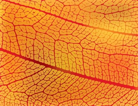 structure of autumn leaf - illustration Illustration