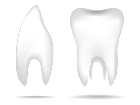 isolated white illustrations of the human teeth Vector