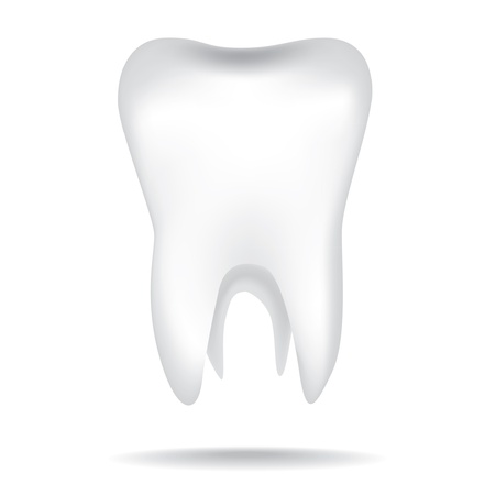 isolated white illustrations of the human tooth Vector