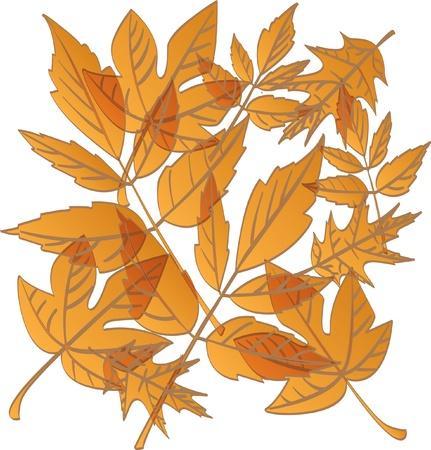 autumn leaf frame:  color autumn falling leafs - illustration