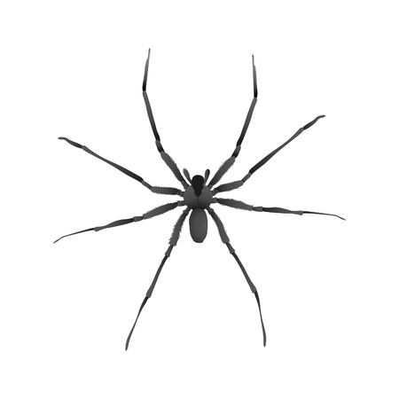 poisonous insect: isolated illustration of a big spider Illustration