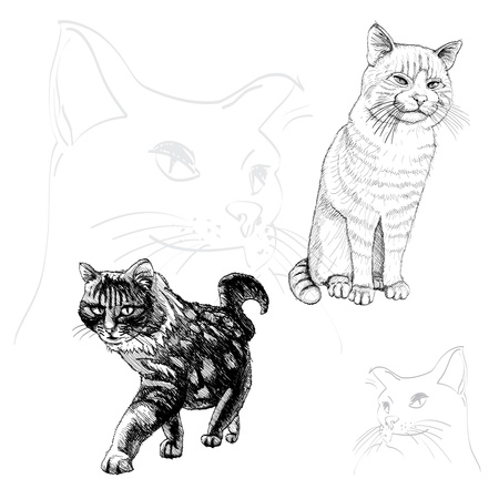 isolated outline cats on white - illustration Vector