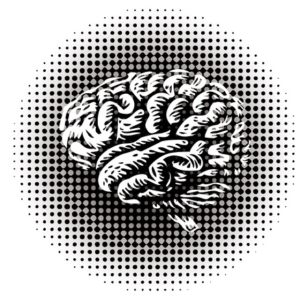 whole human brain isolated - illustration Vector