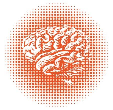 cerebro blanco y negro: de todo el cerebro humano aislado - ilustración