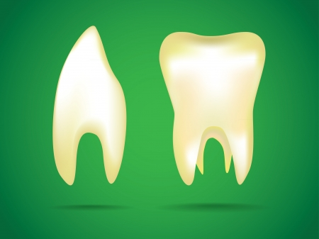 illustrations of the human teeth Vector