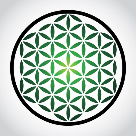 white flower: flower of life symbol - illustration Illustration