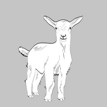 looking away: cute young white goat, illustration