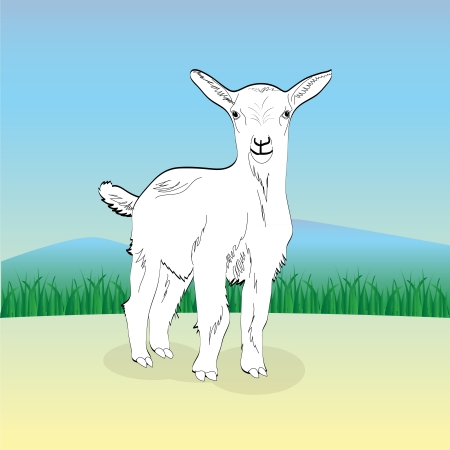 capra: cute young white goat, illustration