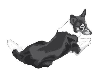 rescue dog: lying big dog, isolated illustration