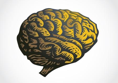 cns: human brain - isolated illustration