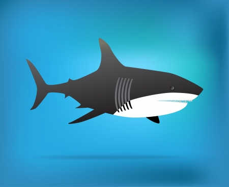 Shark illustration Illustration