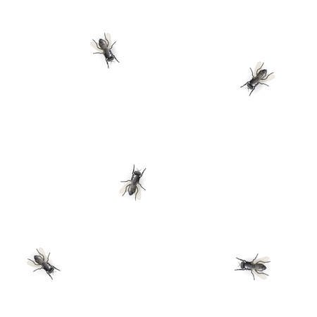 chaotical: Flies on white background - illustration