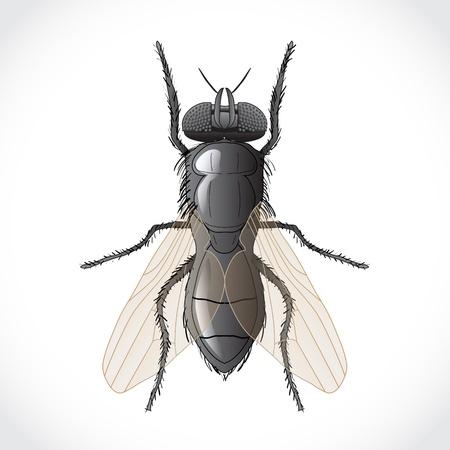 hum: Fly - illustration