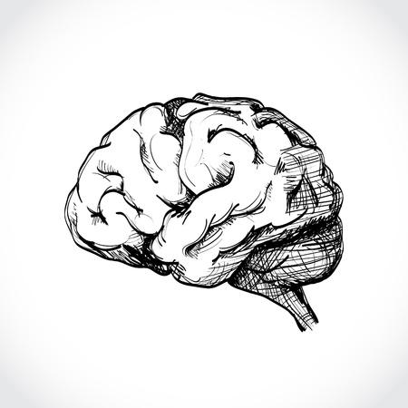 Isolated human brain sketch - illustration