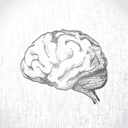 vieze handen: Geïsoleerde menselijke brein sketch - illustratie
