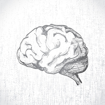 Isolated human brain sketch - illustration Vector
