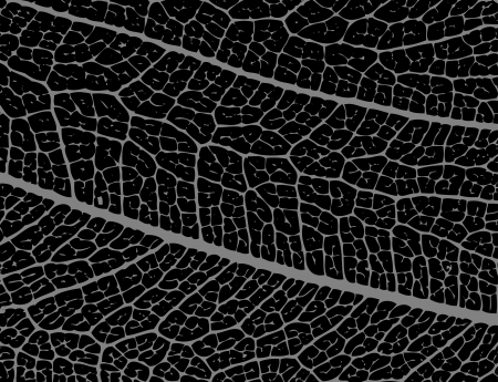 macro leaf: Negative image of leaf structure - illustration
