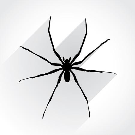 wild web: Spider in flat design