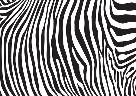 Zebra stripes pattern, illustration