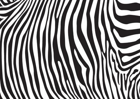 rallas: Rayas de la cebra patrón, ilustración Vectores