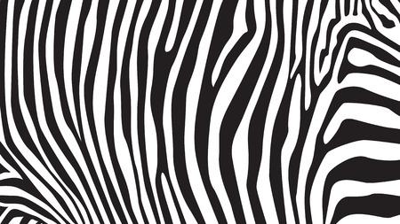 cebra: Rayas de la cebra patrón, ilustración Vectores