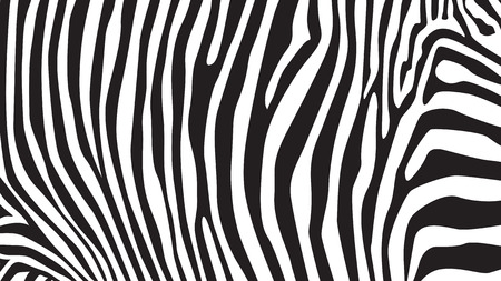 fabric painting: Zebra stripes pattern, illustration