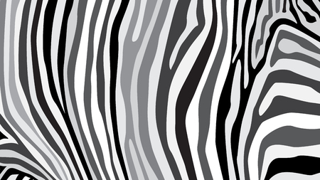 zebra pattern: Zebra pattern created from grey and black colour, illustration Illustration