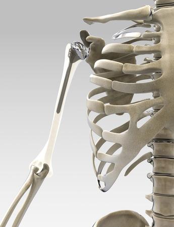 Bras 3D et l'épaule prothesis illustration Banque d'images - 48653519