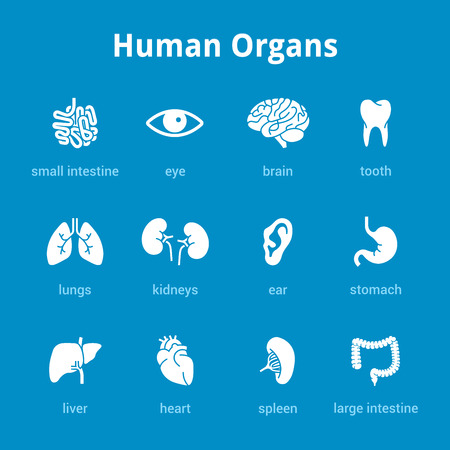 heart disease: White medical human organs icon set on blue background Illustration