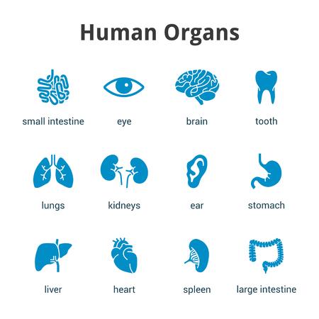 Blauwe medische menselijke organen icon set op een witte achtergrond Stock Illustratie